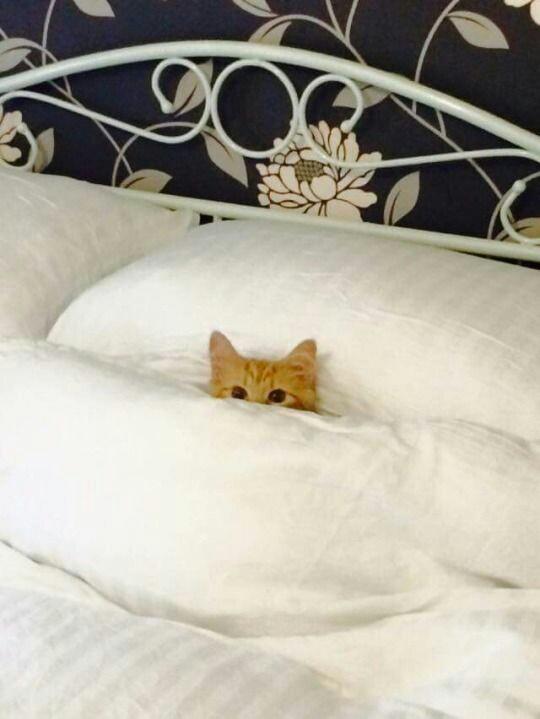 Animali buffi da condividere il micio nel letto
