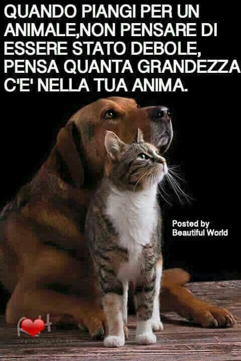 Bellissime Frasi Sui Nostri Amici Animali