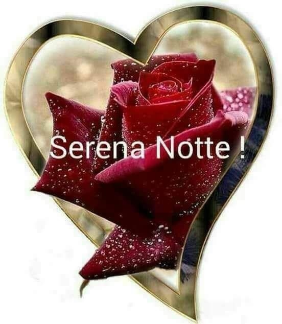 Bellissime immagini per buonanotte con i fiori archives for Foto di rose bellissime