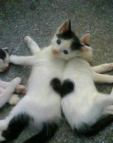 Dolci micetti che formano un cuore animali teneri da condividere