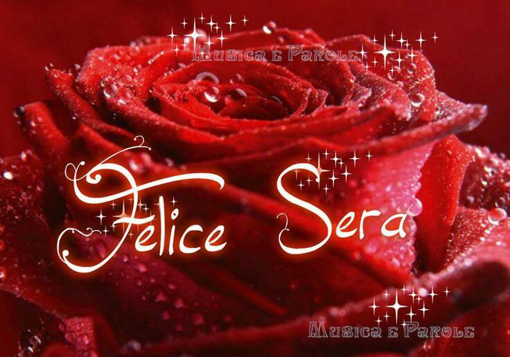 Felice sera con una stupenda rosa rossa immagini belle