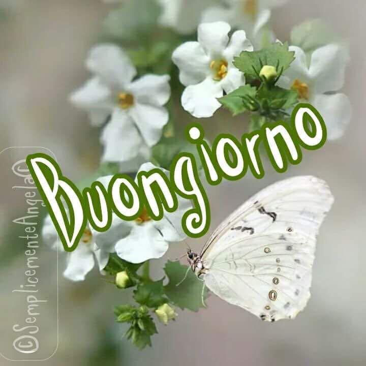 Immagini Buongiorno Con Farfalle E Fiori Bianchi