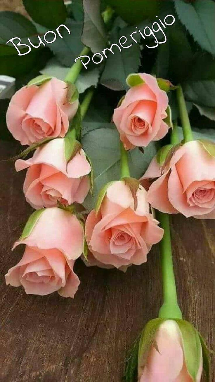 Immagini Belle Del Buon Pomeriggio Con Rose Rosa Archives
