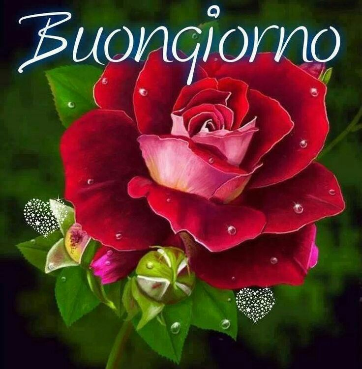Immagini del buongiorno con i fiori for Foto immagini buongiorno