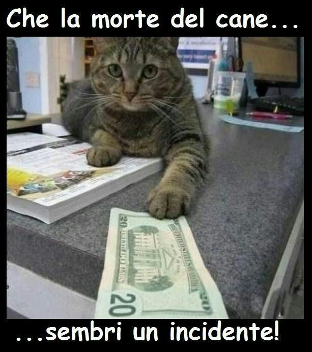 Immagini divertenti meme gatti da scaricare subito