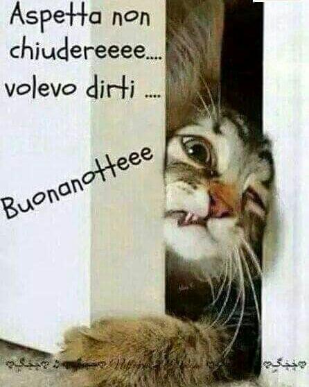 Immagini Per Buonanotte Con I Gatti Bellissimeimmaginiit