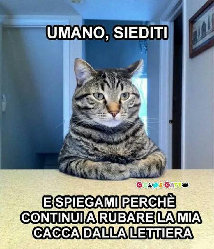 Meme immagini buffe di gatti da condividere gratis