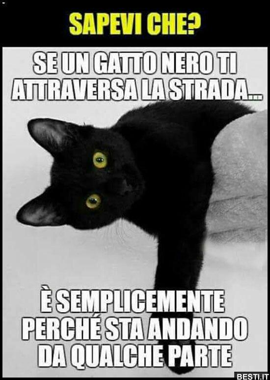 Meme immagini super divertenti con i gatti