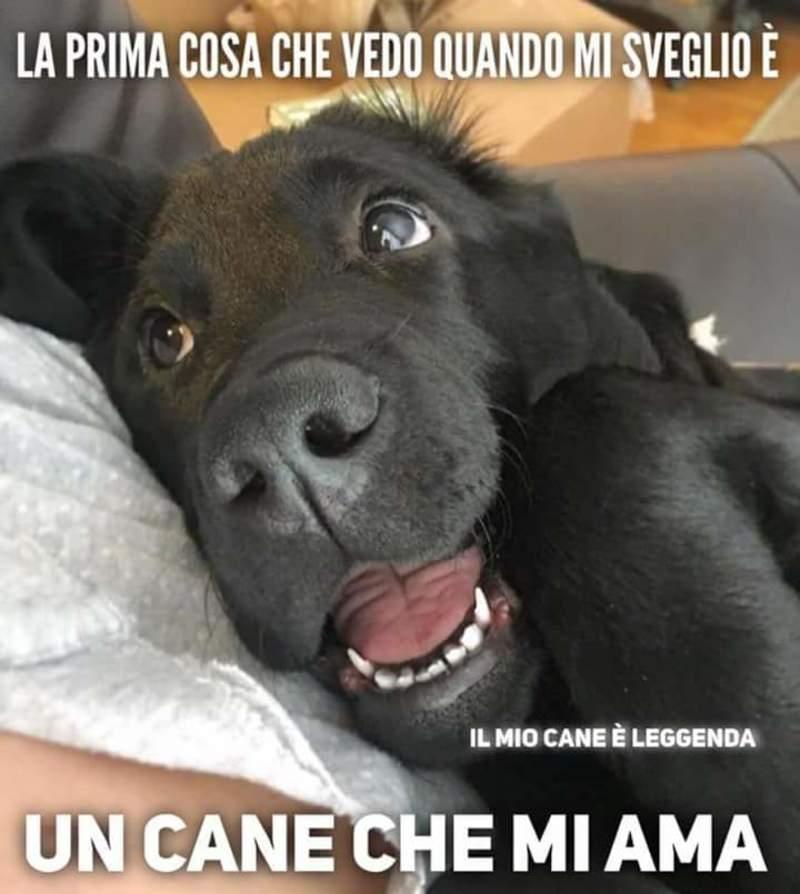 Bellissime immagini sull'amore per i cani