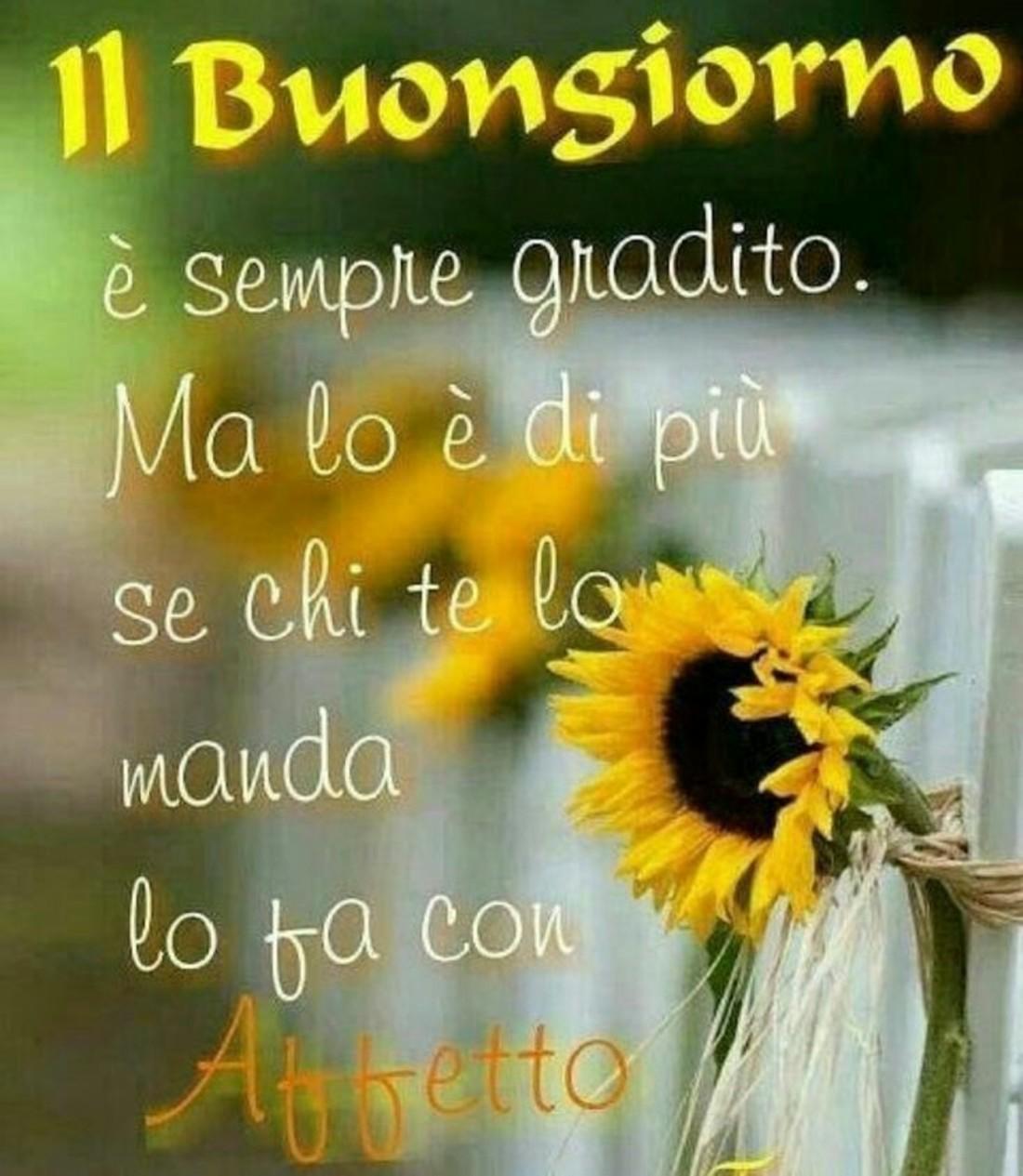 Buongiorno con fiori girasole for Foto belle di buongiorno
