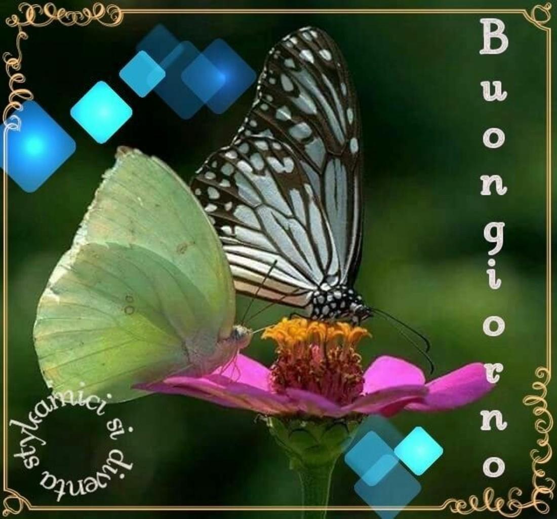 Buongiorno Farfalla Bellissimeimmagini It