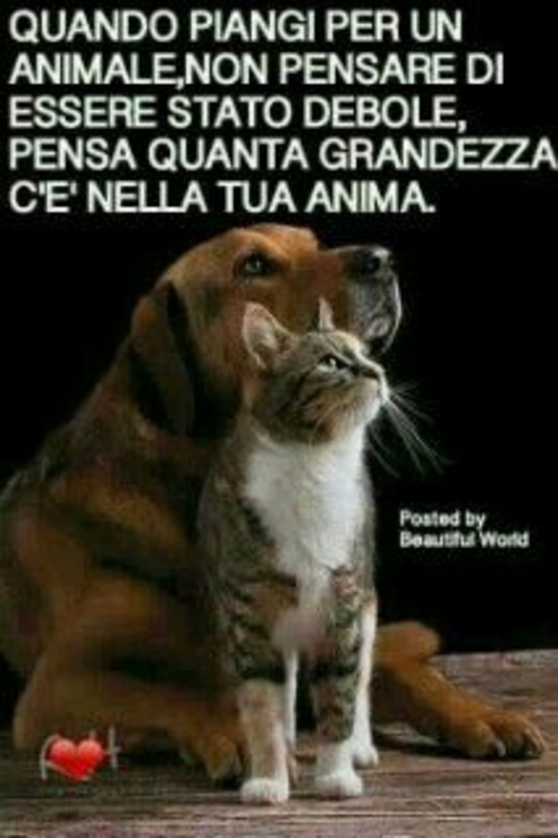 Frasi belle sui cani