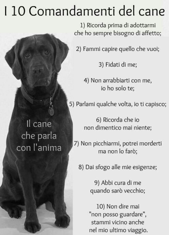 I 10 comandamenti del cane immagini bellissime