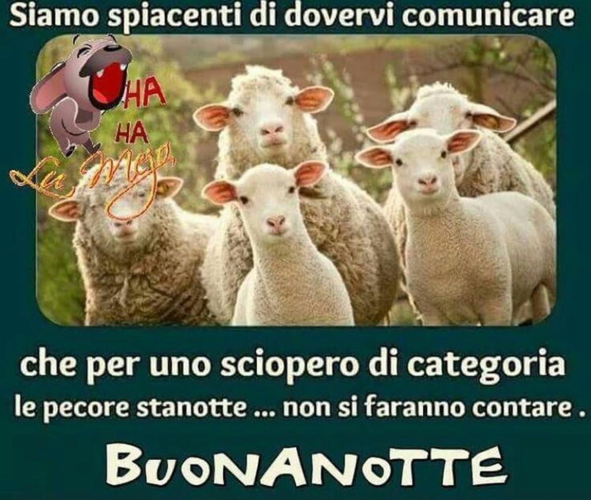 Immagini Buonanotte Da Ridere Contare Le Pecore