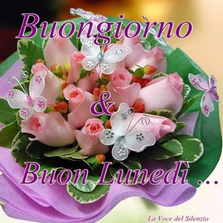 Immagini buon luned buongiorno paperino 1 for Immagini buon lunedi amici