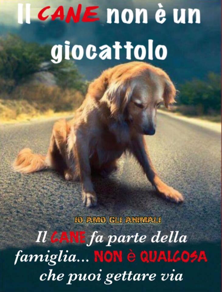 Immagini belle contro l'abbandono dei cani il cane non è un giocattolo