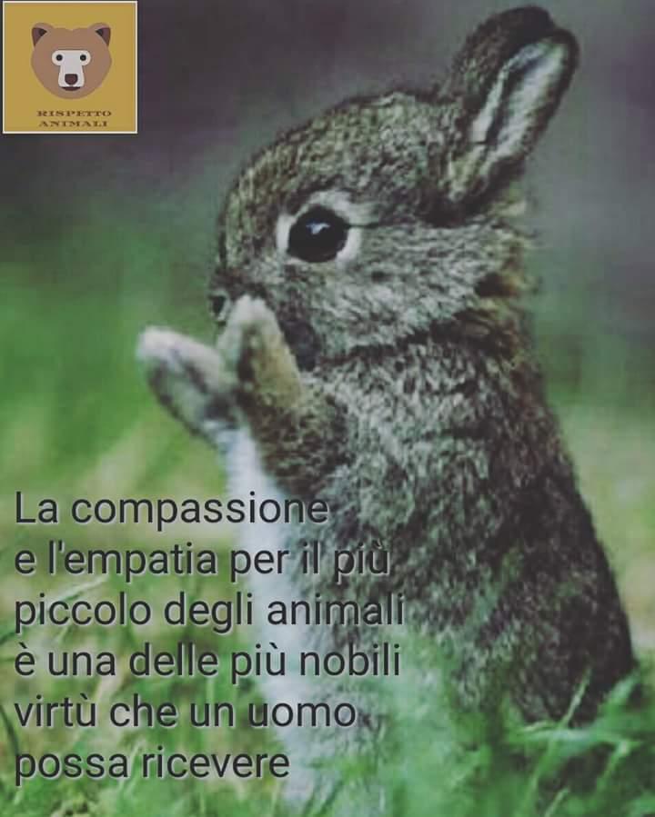 Immagini belle per imparare a rispettare gli animali