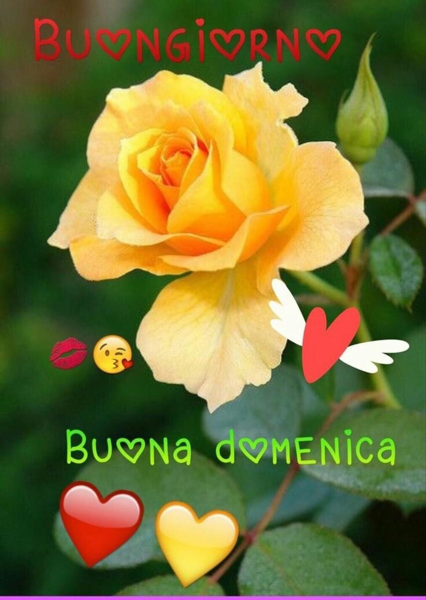 Immagini per Buona Domenica con i fiori (2)