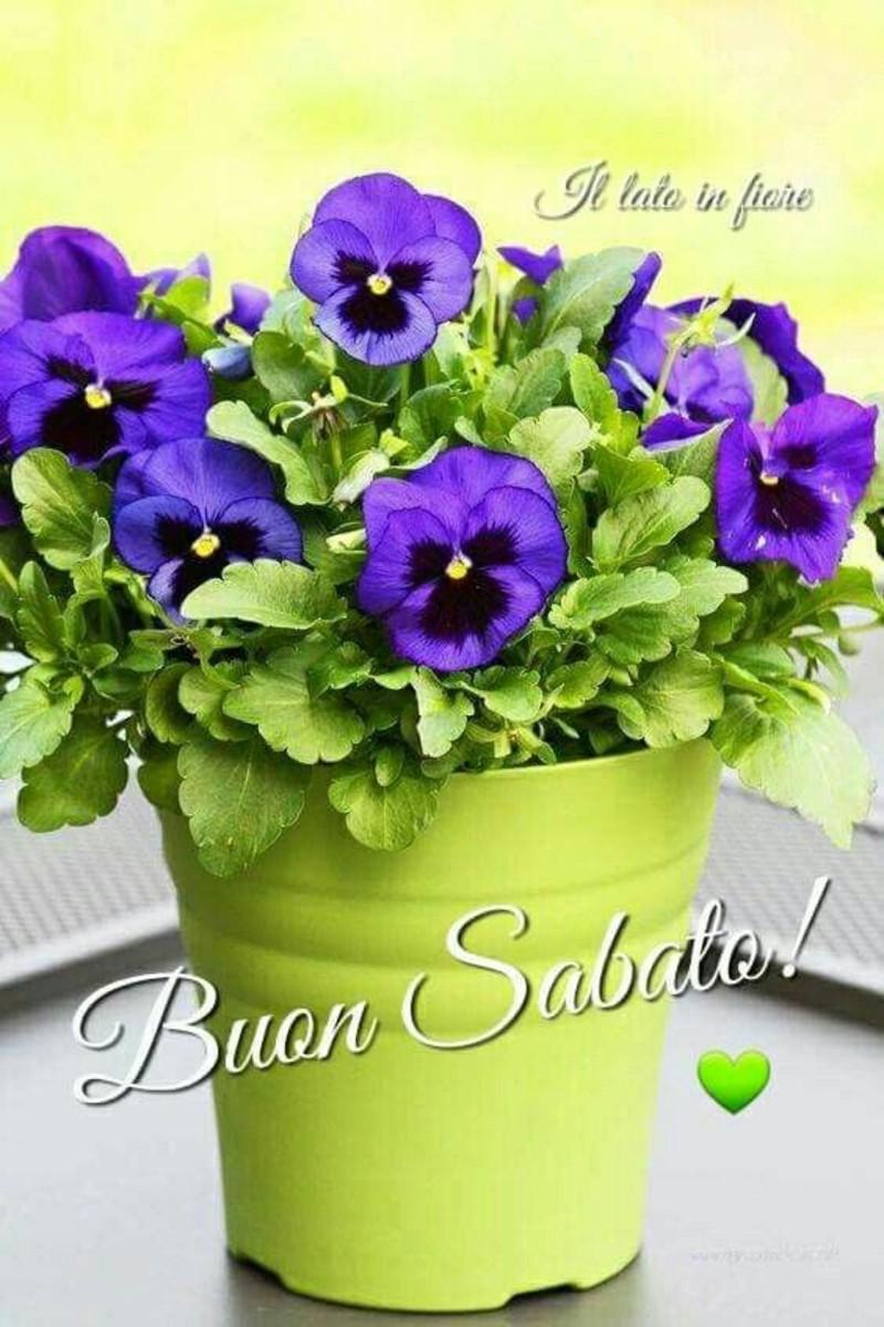 Buon Sabato immagini con i fiori (5)