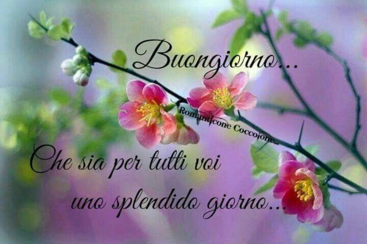 Buongiorno A Tutti Voi Bellissimeimmagini It