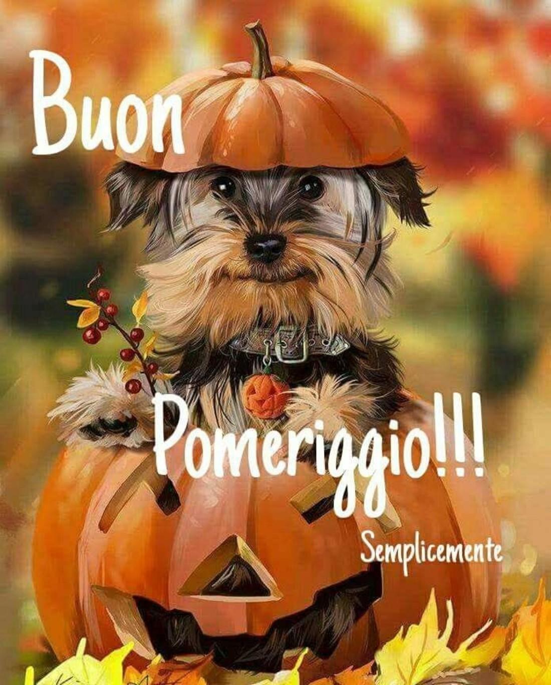 Buon Pomeriggio Halloween Bellissimeimmaginiit