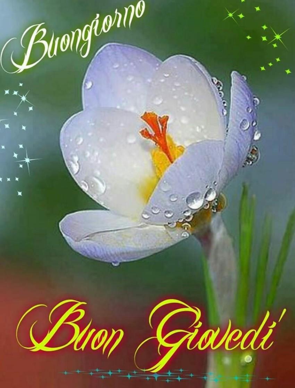 Buon Giovedì coi fiori 1