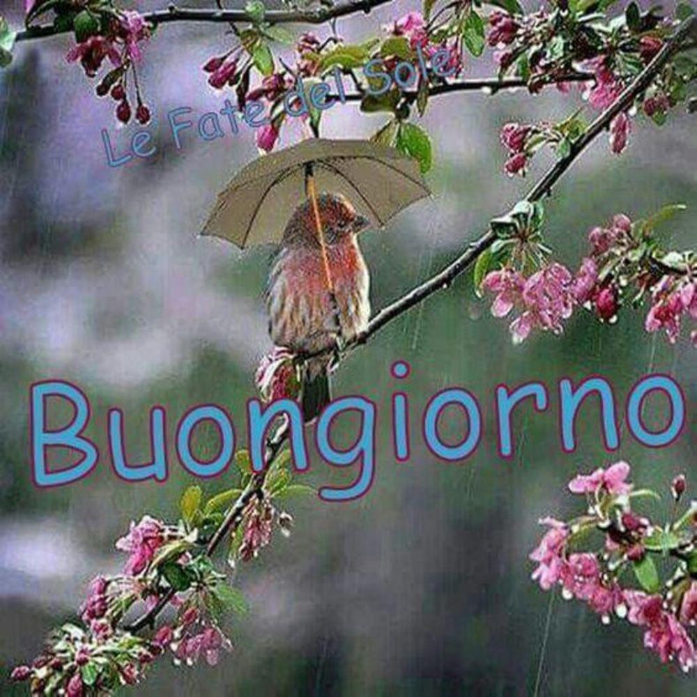 Piove Buongiorno immagini bellissime 4664