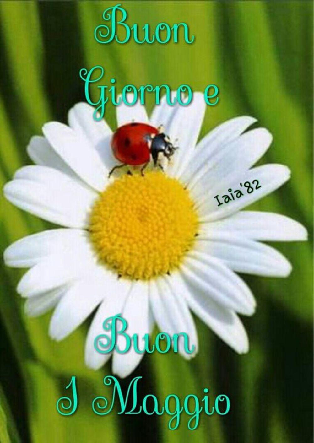 Buon 1 Maggio Buongiorno 3