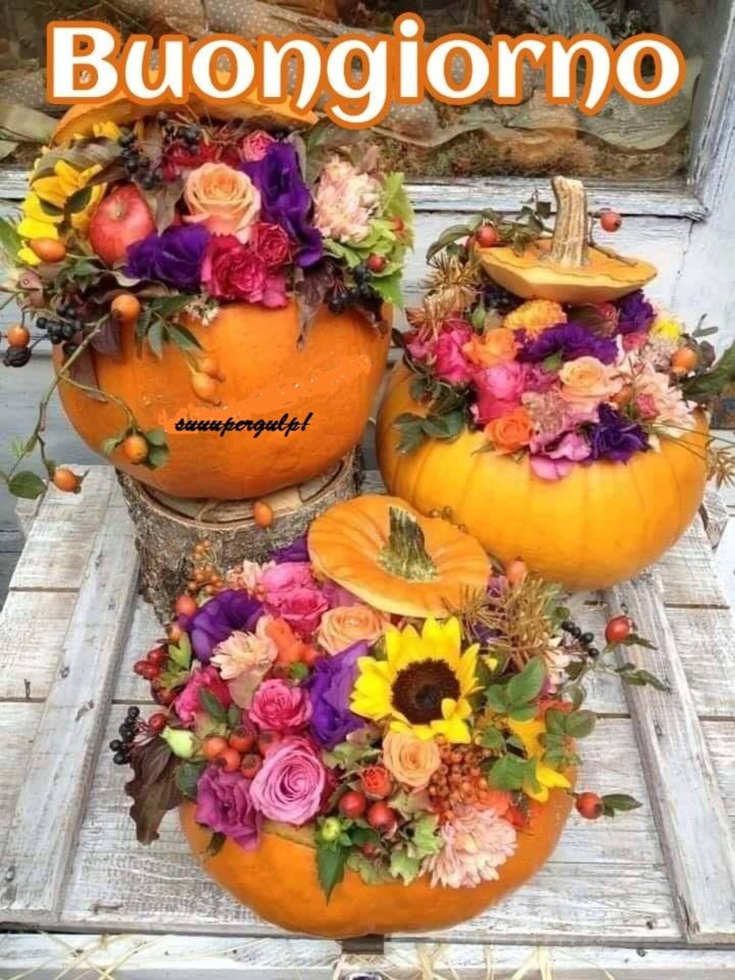 Buongiorno con le zucche di Halloween